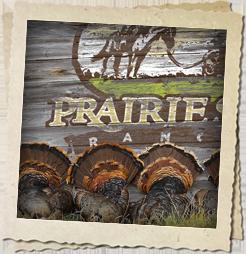 Turkey Hunting at Prairie Sky